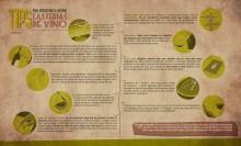 Infografía V Ferias de Vino